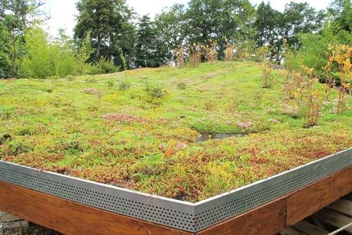 Extension ossature bois avec toiture végétalisée